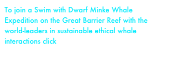 To join a Swim with Dwarf Minke Whale Expedition on the Great Barrier Reef with the world-leaders in sustainable ethical whale interactions click here